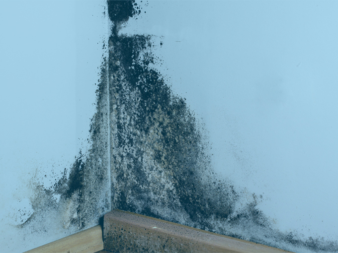 Mold Inspections and Remediation | New Jersey | HS Restoration