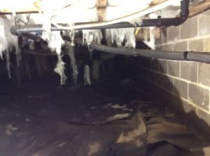 crawlspace cleanup